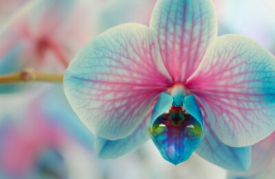 Flower Power – Naples Lifestyle